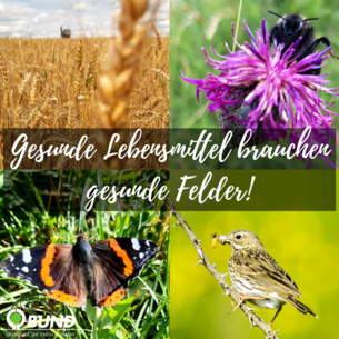 Artenvielfalt auf dem Feld
