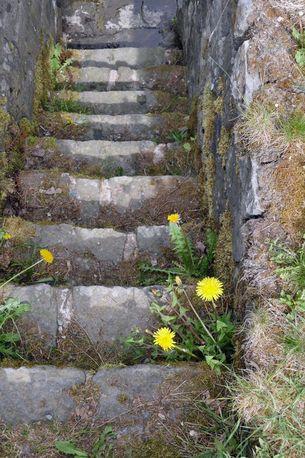 Treppe mit Löwenzahn