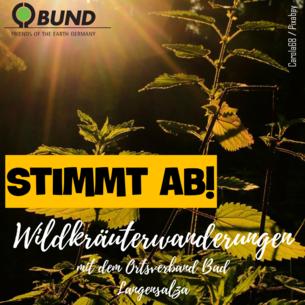 """Sharepic zur Abstimmung Projekt """"Wildkräuterwanderungen mit dem Ortsverband Bad Langensalza"""""""